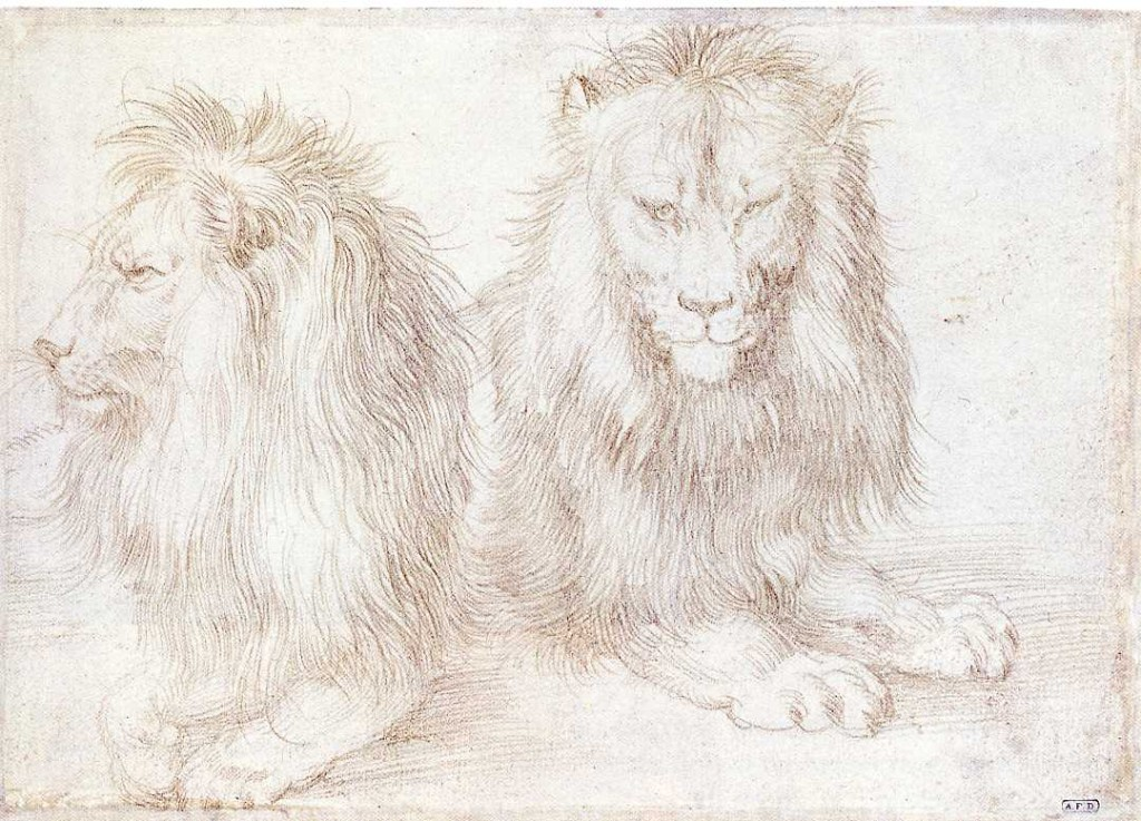 3-61 Albrecht Dürer, Two Studies of a Lion, 1521. Silverpoint on pinkish prepared paper, 12.2 x 17.1. Kupferstichkabinett, Berlin.