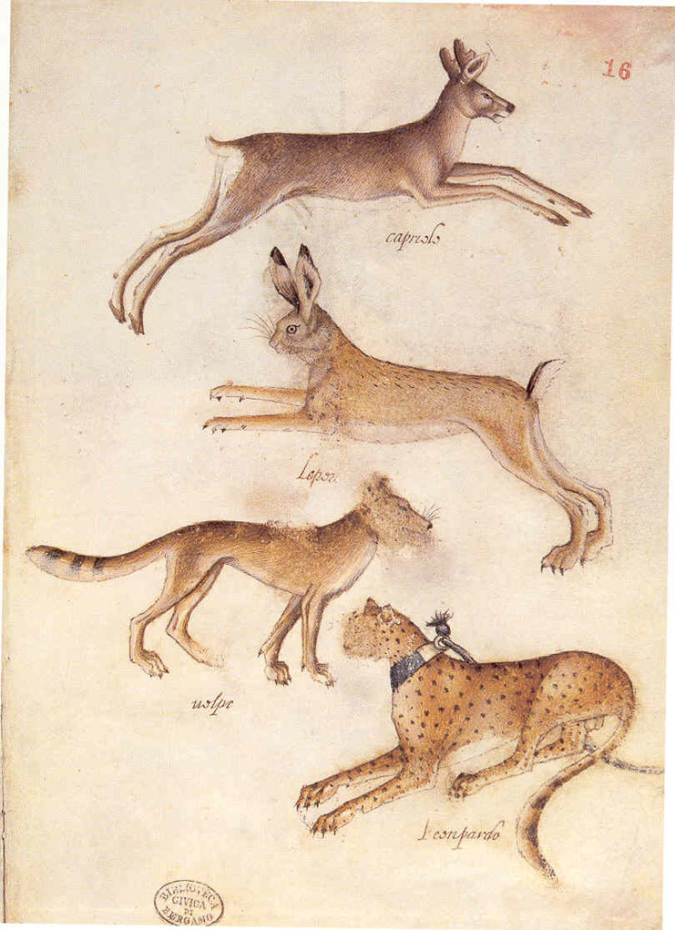 2-3 Giovannino de'Grassi, Roebuck, Hare, Wolf, Leopard, ca. 1389-98. Pen and washes, silverpoint with white heightening on parchment, 26 x 17.5 cm. Civica Biblioteca Angelo Mai, Bergamo.