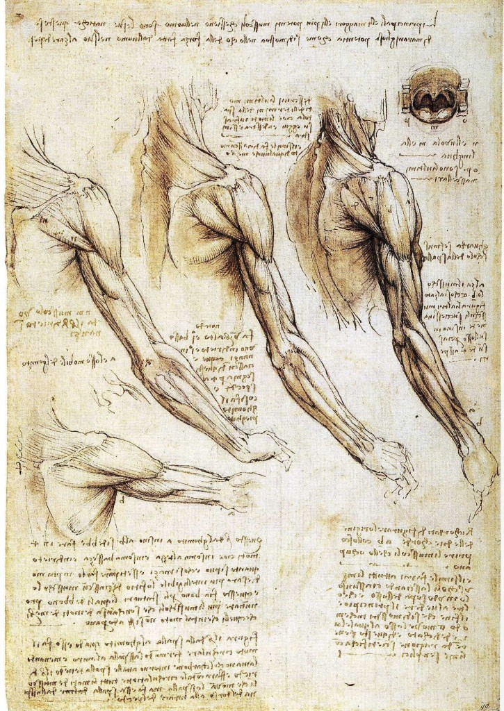 3-7 Leonardo da Vinci, Muscles of the Arm, Shoulder,and Neck, ca. 1510-1511. Left: pen and ink and wash, 28.9 x 19.9 cm. Royal Library, Windsor.
