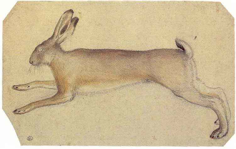 2-4 Pisanello, Hare, ca. 1430-32. Watercolor over black chalk, 13.7 x 22.3 cm. Louvre Museum, Paris.