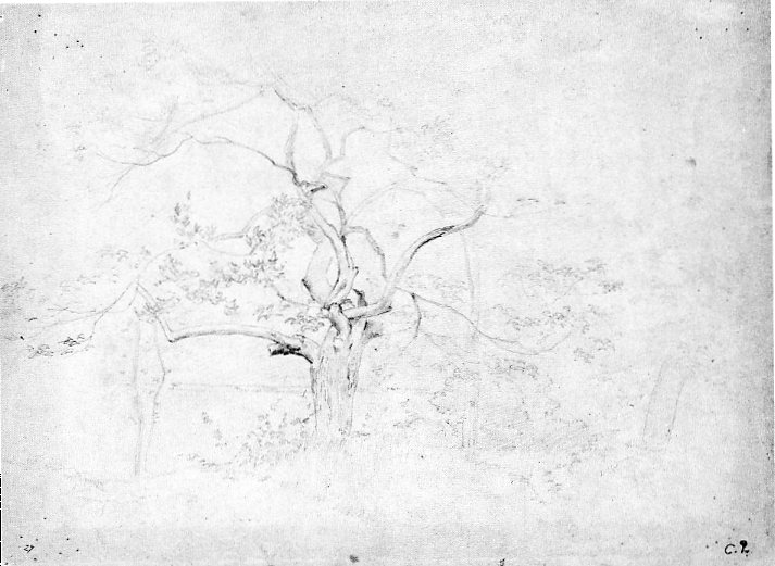 6-34 Camille Pissarro, Study of a Tree (recto), ca. 1860-65. Pencil, 23.8 x 31.6 cm. Oxford, Ashmolean Museum.