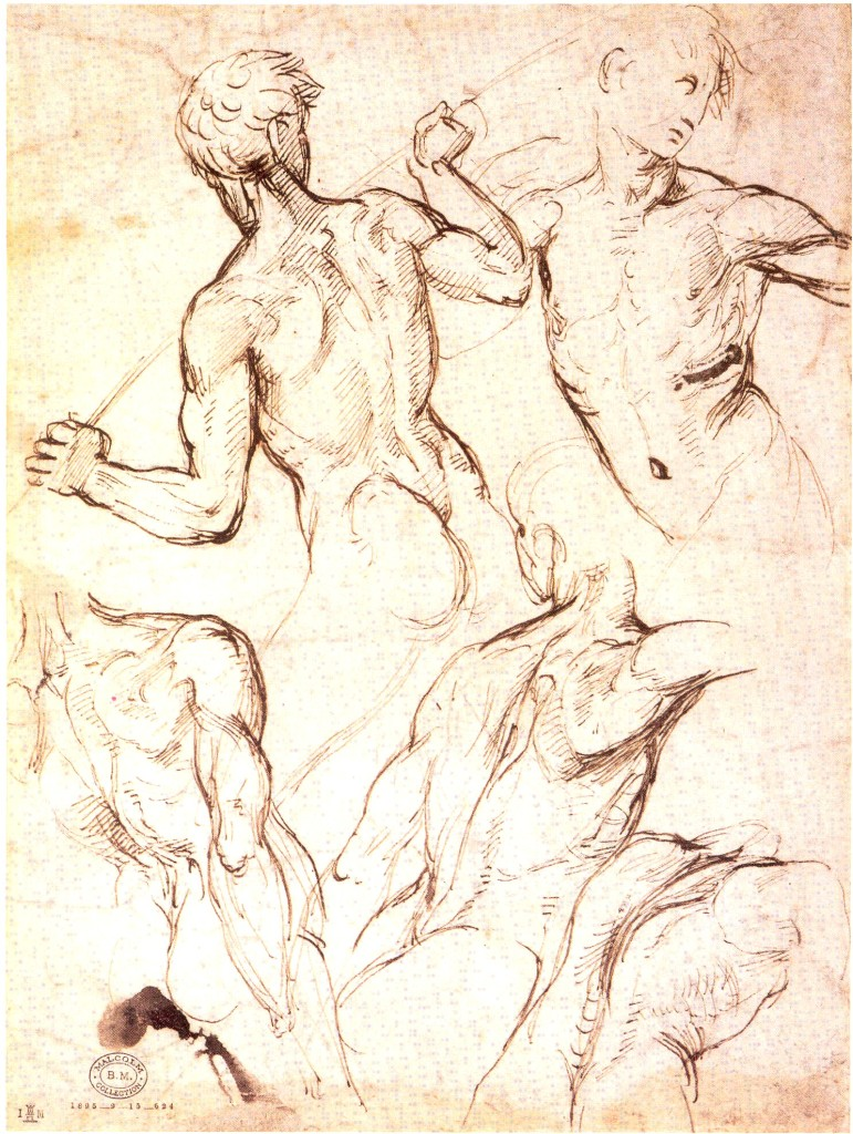 3-17 Raphael, Five Studies of a Male Torso, 1504-08. Pen and ink over leadpoint underdrawing, 26.9 x 19.7 cm. British Museum, London.