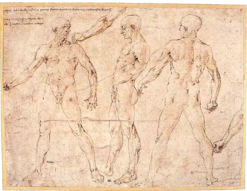2-17 Antonio Pollaiuolo, Nude Man Seen from Front, Side, and Back, ca. 1465. Pen and brown ink with traces of brown wash and stylus incisions, 26.4 x 35.1 cm. Musée du Louvre, Paris.
